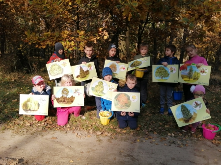 Rozpoznajemy drzewa w naszej okolicy- w poszukiwaniu jesieni