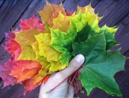 Nadchodzi jesień...