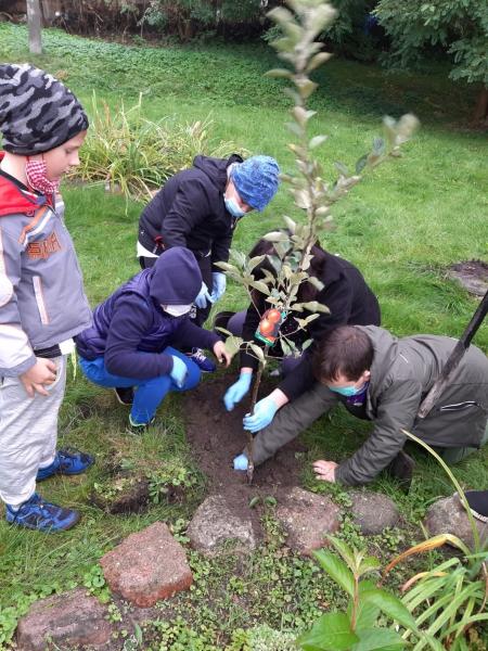Światowy Dzień Drzewa w Barcikowie